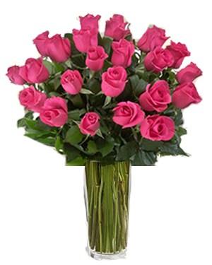 June Celebrates the Rose
