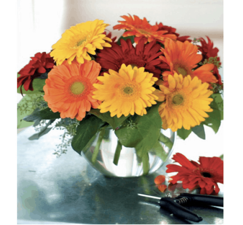 Enjoy the Arrival of Summer with Seasonal Flowers and Plants